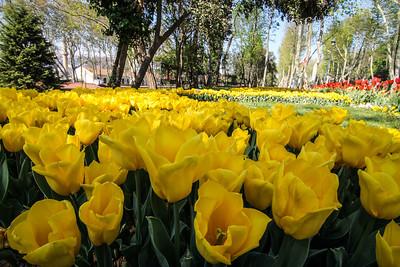 Tulip Festival in Gülhane Park, Istanbul.