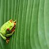 Costa Rica March 2007