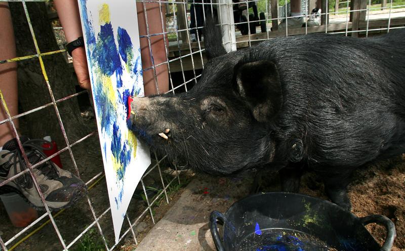Piggy Picasso