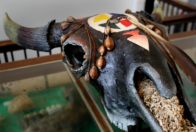 A painted buffalo skull is one of many artifacts on display at the Sand Springs Cultural and Historical Museum.