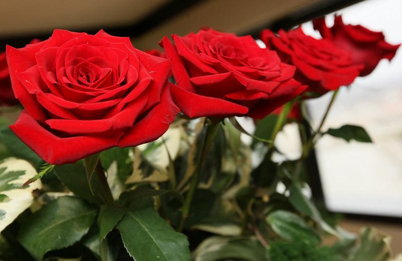 Valentines Roses. PHOTO MAIKE SABOLICH