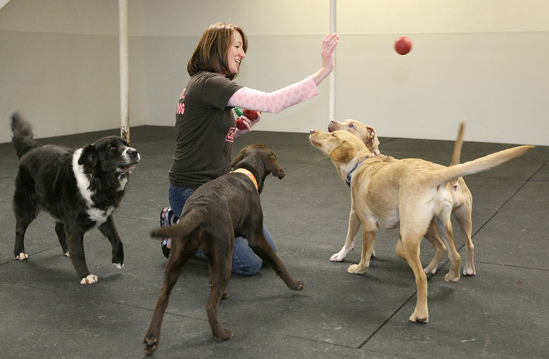 April Campbell, owner of Central Park Dog Daycare, plays with some of the dogs in the facility Friday. PHOTO BY MAIKE SABOLICH