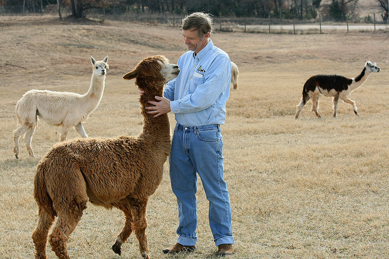 Steve Hull with apaca females at Timberlake Farms in Edmond. PHOTO BY MAIKE SABOLICH