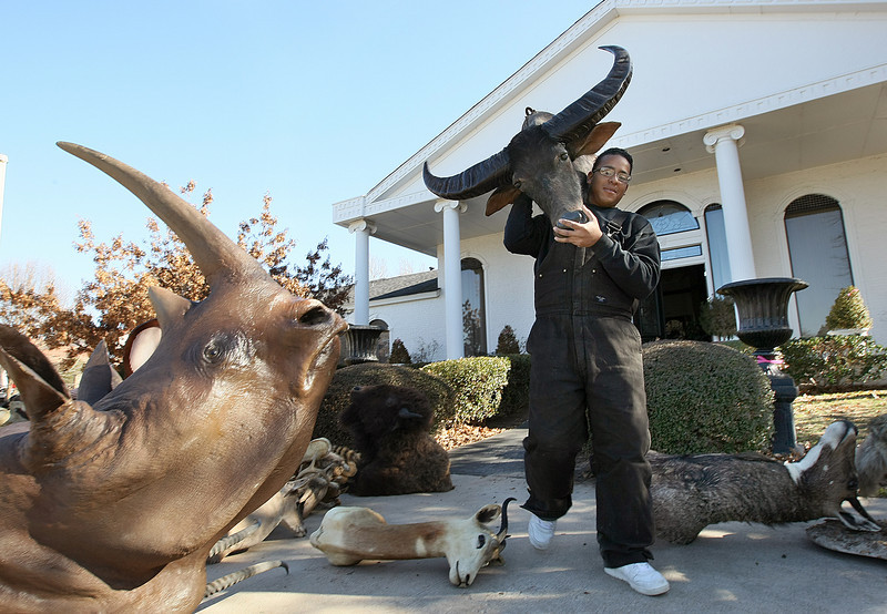 Joseph Billie carries a stuffed water buffalo head out of the 2010 Symphony Show House and Gardens on 2550 E Overholser Drive Tuesday. The show house is currently in the preparation stage. PHOTO BY MAIKE SABOLICH