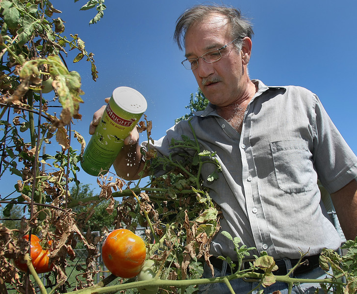 Paul Goss, inventor of Bugright, sprinkles a little of his all-natural pesticide on tomato plants.