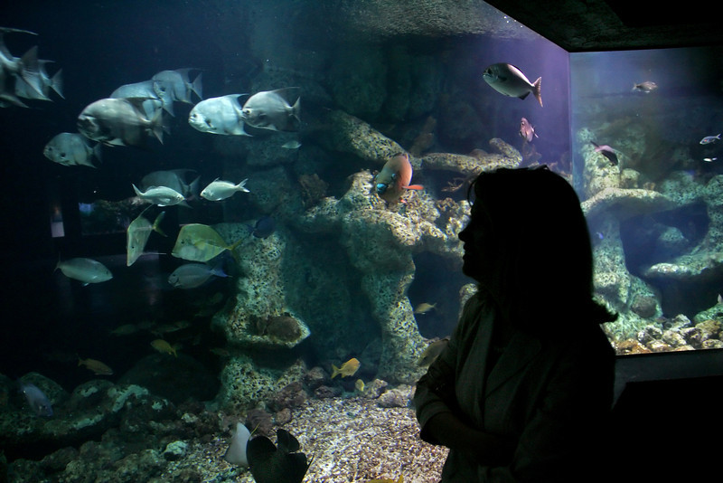A new marketing effort intends to make a regional tourism destination from the metro Tulsa's spreading Arkansas River entertainment venues, led by the Oklahoma Aquarium.