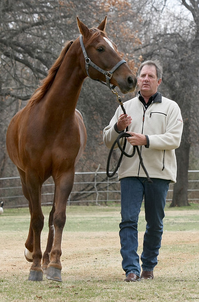 Stanton Morey, the new judges and stewards commissioner of the Arabian Horse Association, with Miami Vice at Hallmark Farms horse training facility in Edmond. PHOTO BY MAIKE SABOLICH