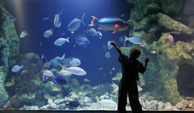 The Oklahoma Aquarium in Jenks will be one of seven locations OklaVision, an online tourism network focusing on Oklahoma. Cox Business is providing the advanced data network at the locations.