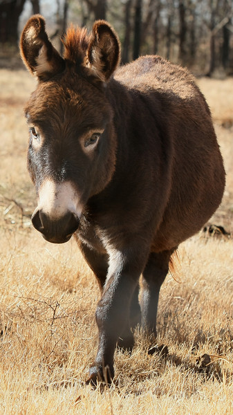 Donkey in Deer Creek. PHOTO BY MAIKE SABOLICH