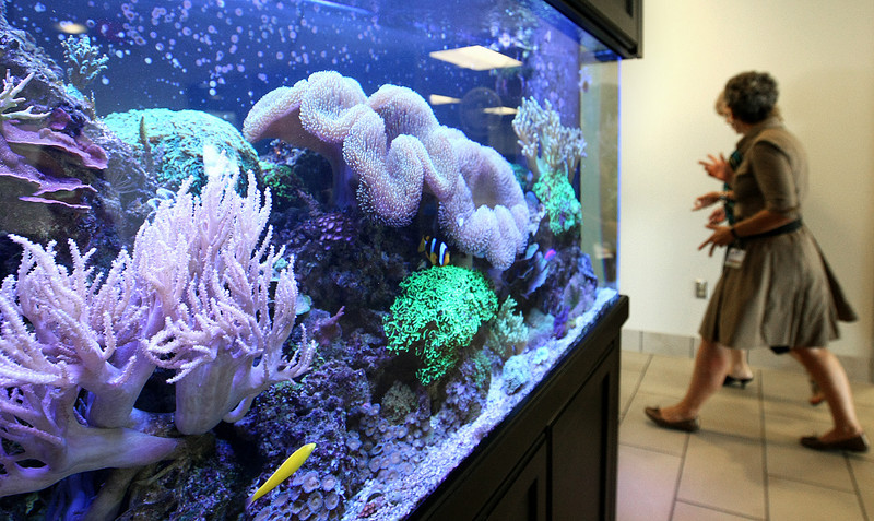 Fish tank at Children's Hospital. PHOTO BY MAIKE SABOLICH