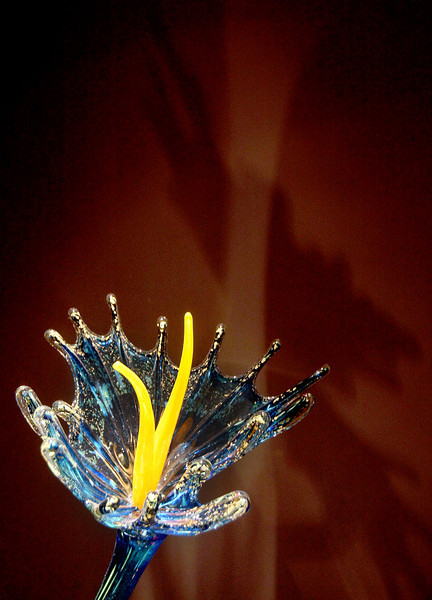 Detail from the Chihuly installationat the Oklahoma Museum of Art. PHOTO BY MAIKE SABOLICH