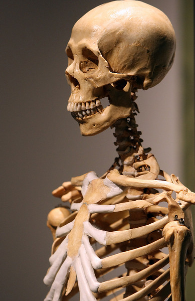 The Bodies exhibit in Tulsa uses Actual human bodies that are preserved and then presented for study.