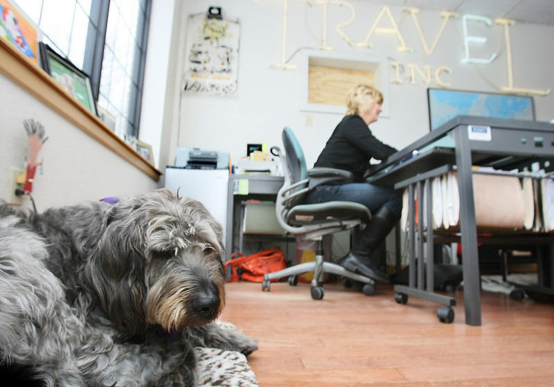 Dreyfuss, Melinda Irwin's dog, hangs out at the ravel agency. PHOTO BY MAIKE SABOLICH
