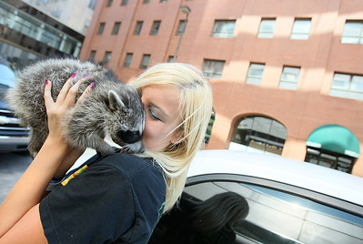 Chelsie Nichols plays with her pet racoon Sugar before going to work downtown Friday. PHOTO  BY MAIKE SABOLICH
