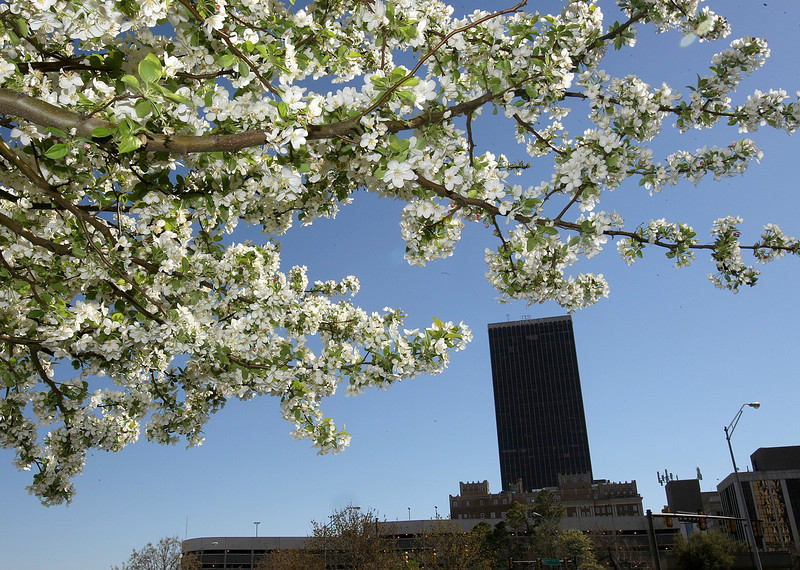 Blossoms over Oklahoma City. PHOTO BY MAIKE SABOLICH