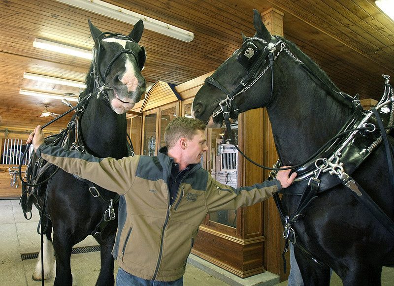 Josh Minshull with Express Clydesdale Jag and Shaq. PHOTO BY MAIKE SABOLICH