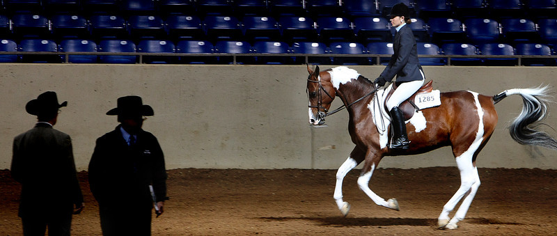 A contestant rides past judges at the Color Breed Congress Pinto Horse show at the Tulsa Fairgrounds.  The horse show runs through Sunday.