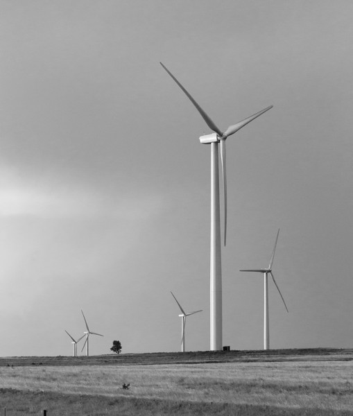 Just west of Tuttle stands a wind farm in pastures and wheat fields.
