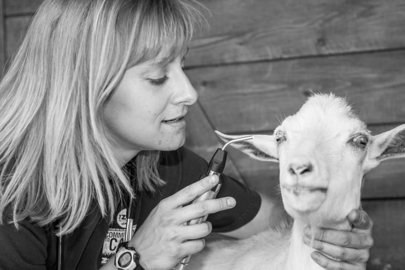 Oklahoma Cty Zoo veternarian Jennifer d'Aagostino checks on Dewey the goat.