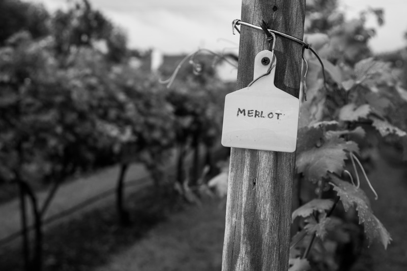 A sign marking rows of grapes at Strebel Creek Farms in northwest Oklahoma City.