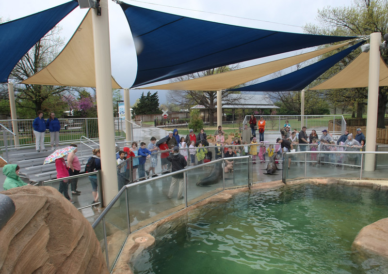 Tulsa Zoo patrons watch the demonstration at Sea Lion Exhibit.