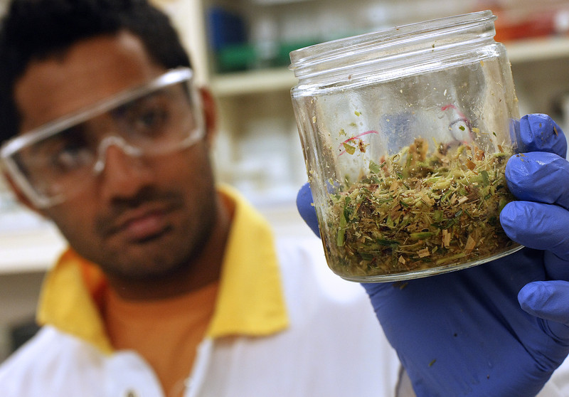 Doctorate student at OSU Naveen Pessani works to convert sweet sorghum into biofuel.