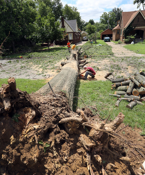 A chain saw crew works to clear a a tree blocking a street in midtown Tulsa.