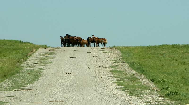 Horses on a rural county road in northern Osage county.
