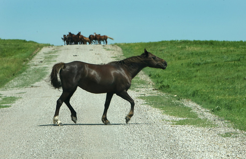 A horse crosses a rural county road in northern Osage county.