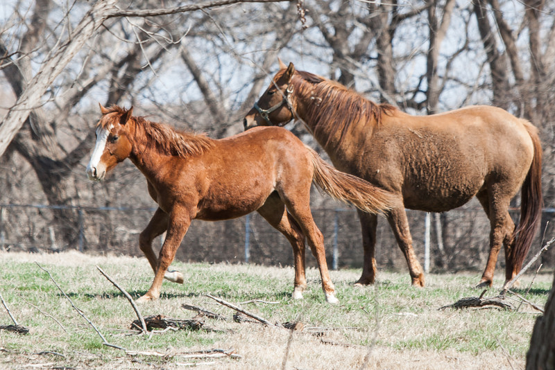 Horses on a ranch just north of Oklahoma City