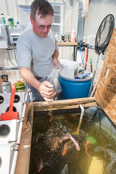 Russel Cox in his self described green house labertory in is back yard. Here he has built the methods he will use in building his talapia farm.