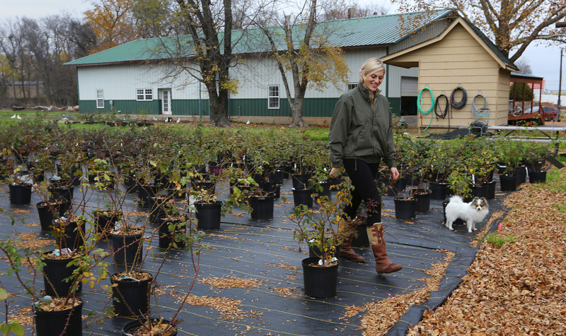 Karen Gardner walks among the hundreds of rose bushes cultivated at Rose Inc. in Broken Arrow.