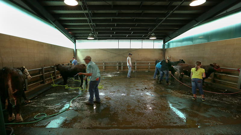 Participants at the Tulsa State Fair wash their livestock in preparations for judging.