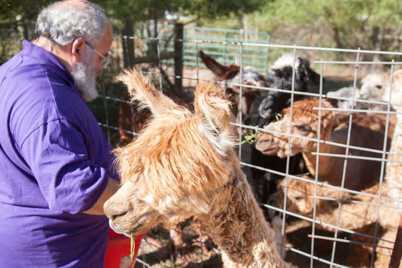 Micheal Alpert owns an Alpaca farm in Oklahoma CIty, OK.