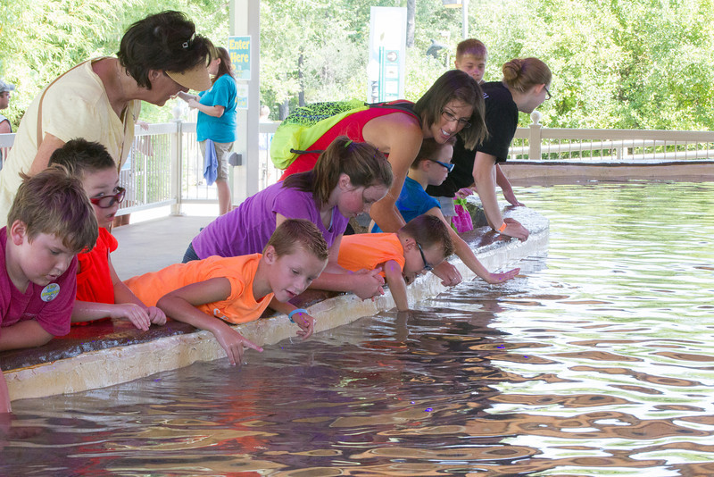 Visitors pet stingrays at Stingray Bay at the Oklahoma City Zoo. Mild summer weather has driven attendance at the zoo up this year.
