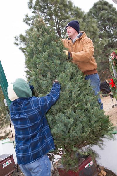 Joseph Hollowell and Drew Polk hold a Christmas tree in the tree shaker at Sorum Mill Tree Farm in Edmond, OK.