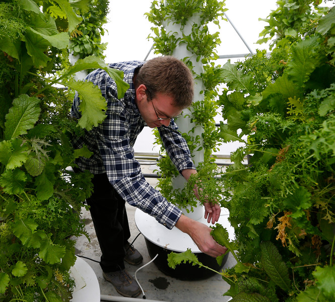 John Sulton, CEO of Sissortail Farms, stands among the hundreds of vertical aeroponic growing stations in the west Tulsa business.<br /> <br /> Copy desk - Double check that it's aeroponic not hydroponic plz