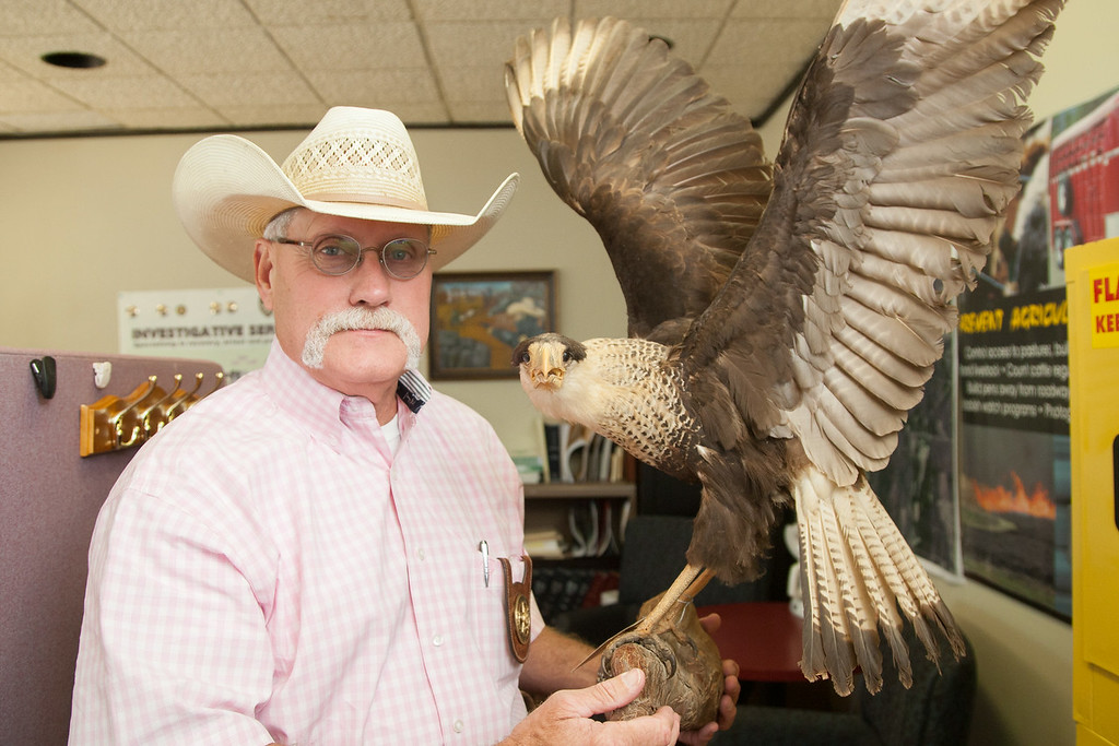 Jerry Flowers holds a stuffed Crested  Caracara, also known as the Mexican Eagle. The birds are illigal to own in the State of Oklahoma.
