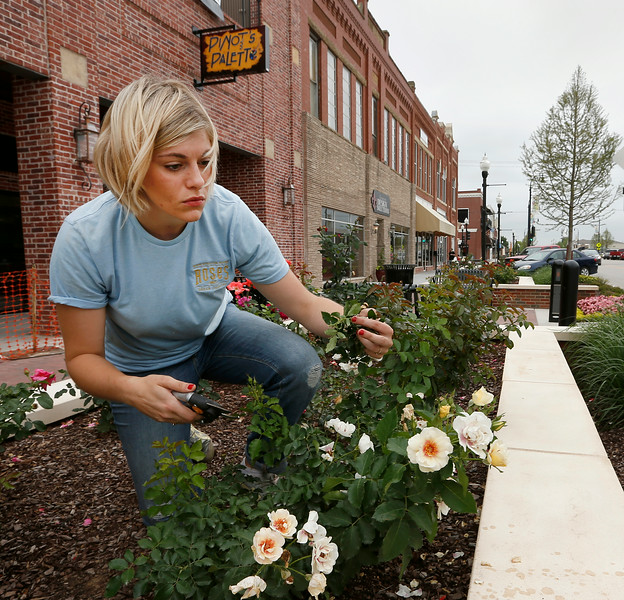 Karen Gardner trims up the rose bushes in the Rose District in downtown Broken Arrow.