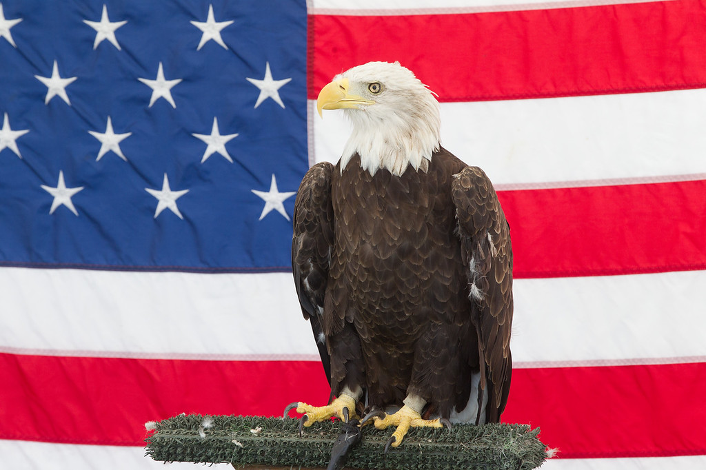Among the attraction at the state fair will be a raptor show featuring an American Bald Eagle.