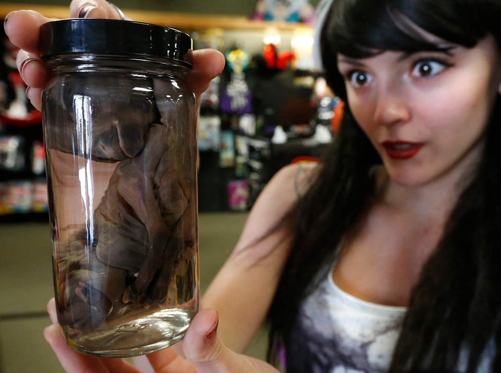 Spirit Halloween store employee Kari Mitchell looks at one of the stores more unique items, a preserved sheep fetus.  The item was spacial ordered by a customer for their halloween party.