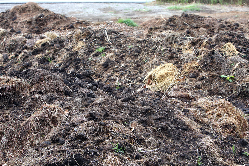 The Pachyderm biomass compost pile at the Tulsa zoo.  The pile decomposes in 6 months to a useable compost which is then used where needed at the zoo.<br /> <br /> Zoodo voodoo.