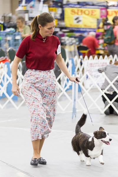 The Summer Classic Dog Show at the Cox Convention Center in Oklahoma City, OK.