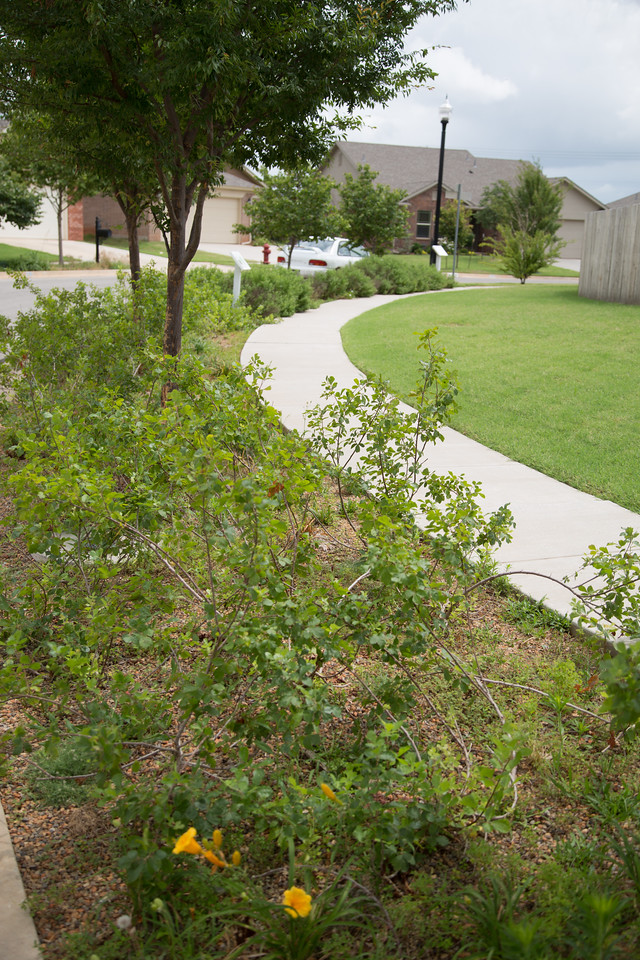 The Trailwood Niehborhood in Norman, OK is experimenting with gardens at the front of lawns to improve the quality of water runoff.
