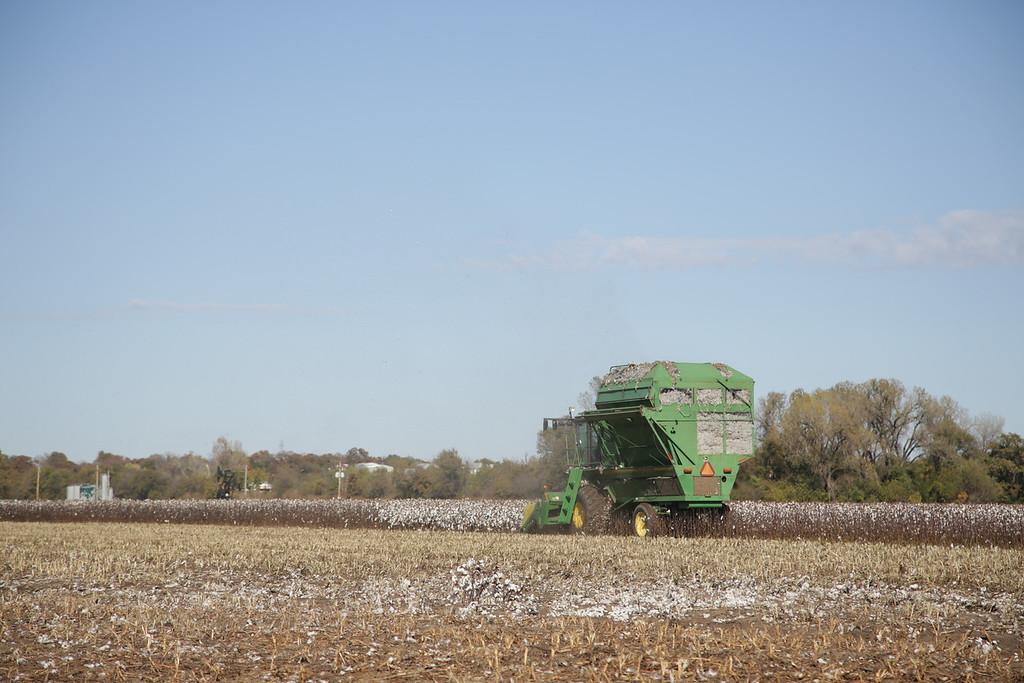 Cotten being harvested east of Harrah, OK.