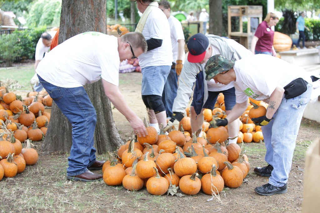 Volenteers from Teleflora helped decorate for fall by unloading thirteen thousand pumpkins at the Myriad Gardens in Oklahoma City.