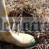 boot_andgreen_shoot