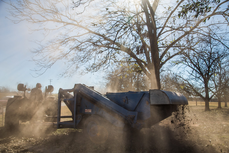 Pecans being harvested at Couch Pecan Farm in Luther, OK.