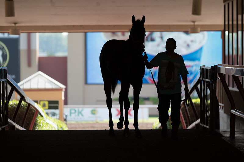 A young horse being trained before a race weekend at Remington Park located at 1 Remington Place in Oklahoma City.