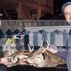 Danchak deer